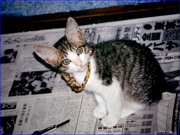 家猫「首輪デカッ」