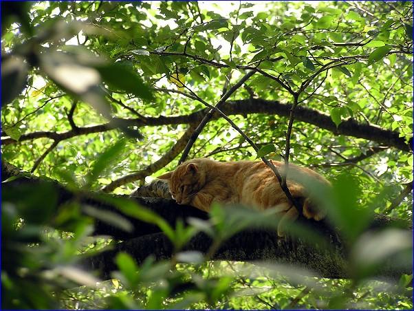山猫「樹上生活者」
