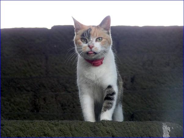 寺猫「癒し子」