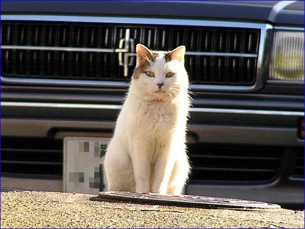 家猫 よくできたモデルさん