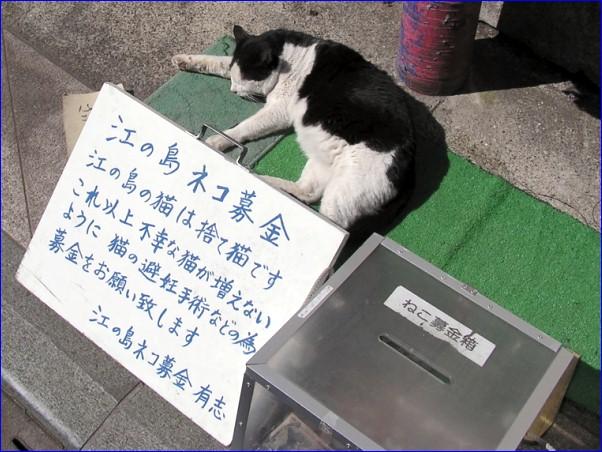 島猫「募金活動」
