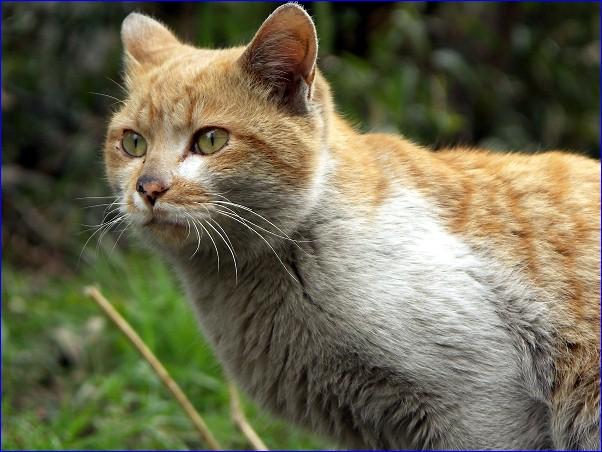 街猫「モンガス」