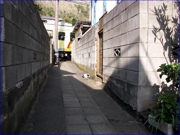 街猫「鎌倉市腰越」