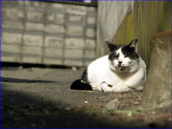 街猫「腰越のモーちゃん
