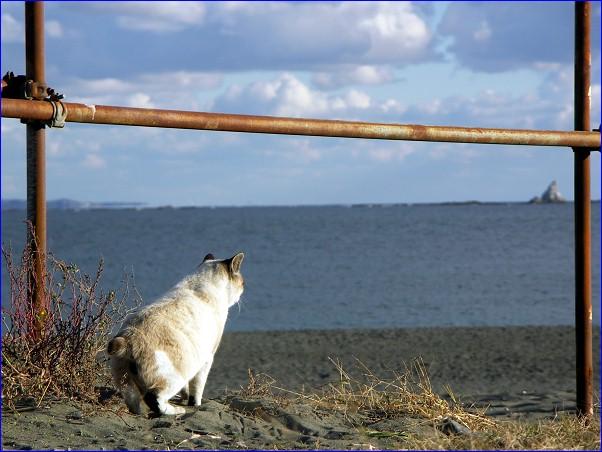 海猫 烏帽子岩