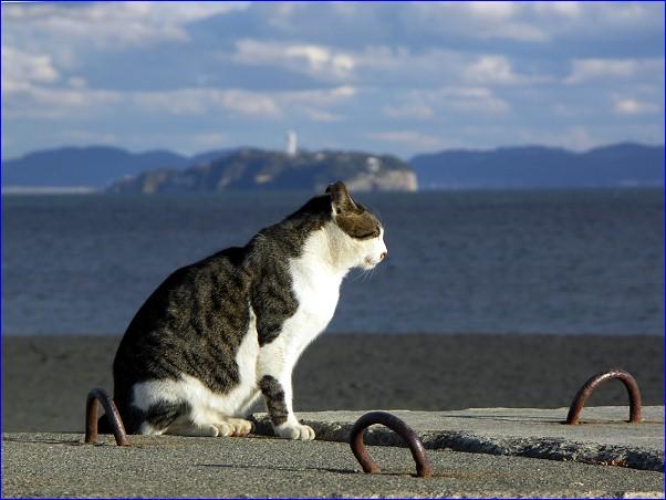 海猫「江ノ島見飽きた」