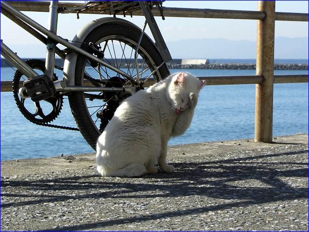 海猫 白家のもうひとり