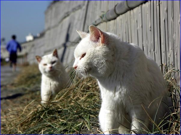 海猫 白家の3姉妹